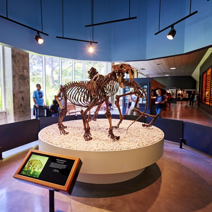Saber-toothed at Exhibit