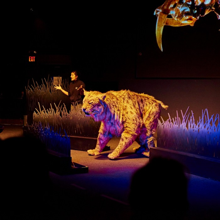 sabertooth cat puppet on stage in ice age encounters show tar pits