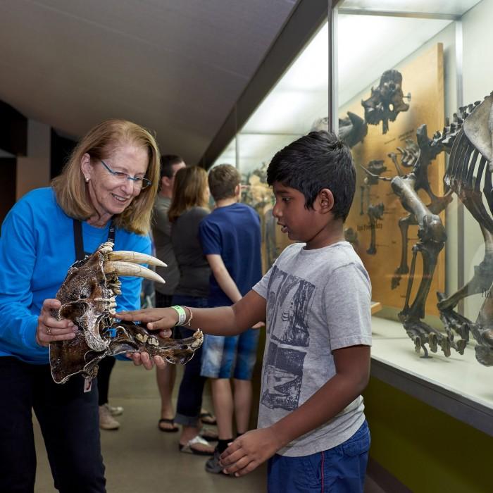 gallery interpreter saberooth smilodon skull la brea tar pits guest kid
