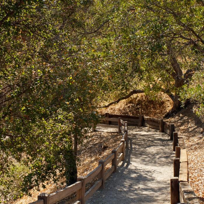 hart ranch trees pathway oak