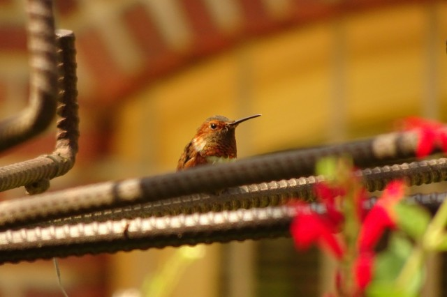 A humming bird at rest next to a feeder