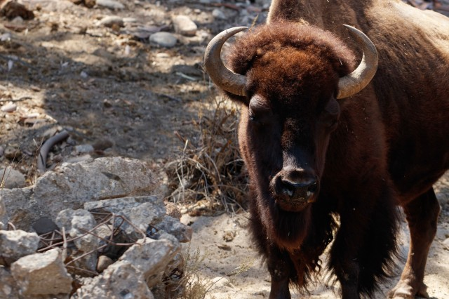 join and give footer HART bison