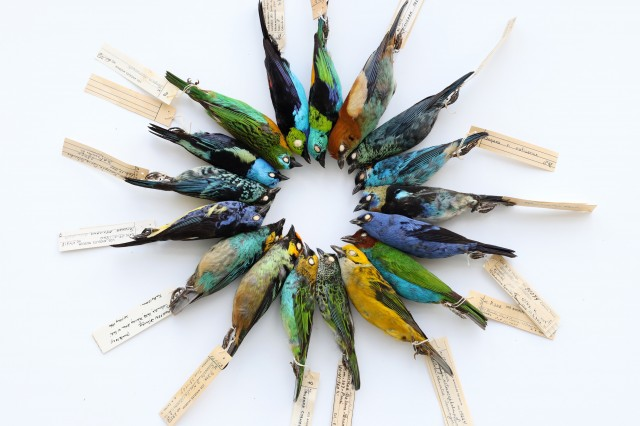 A color wheel of bird skins from the collection.