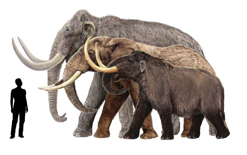 Mammoth Proportions