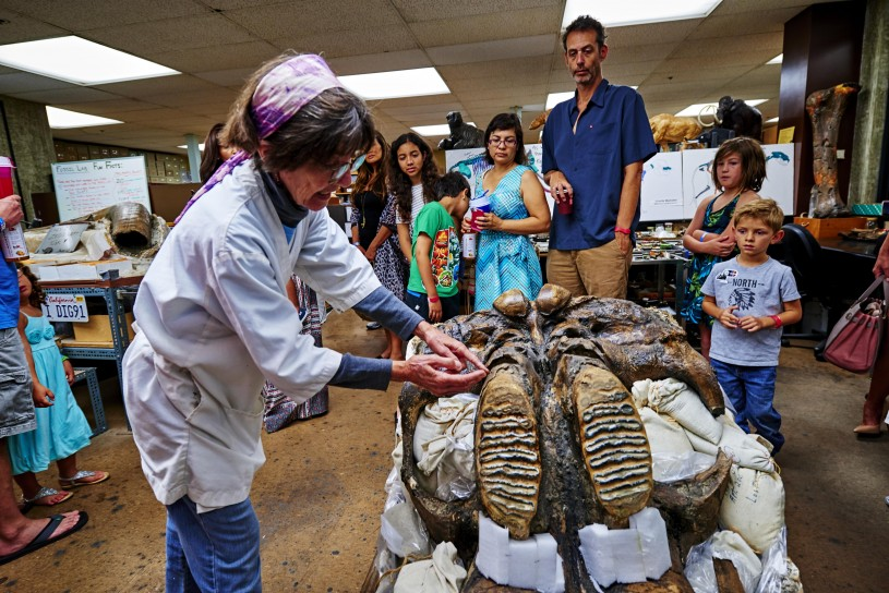 behind the scenes tour at the tar pits fossil lab