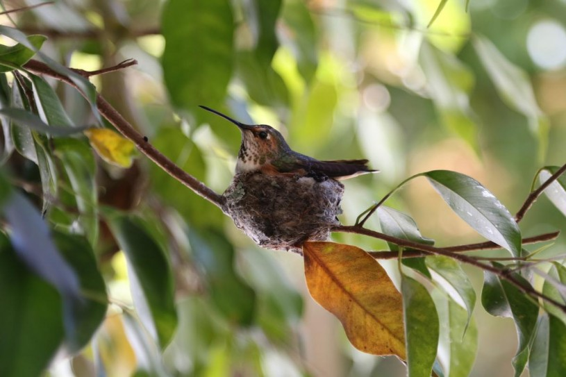 Hummingbird, tree, photography