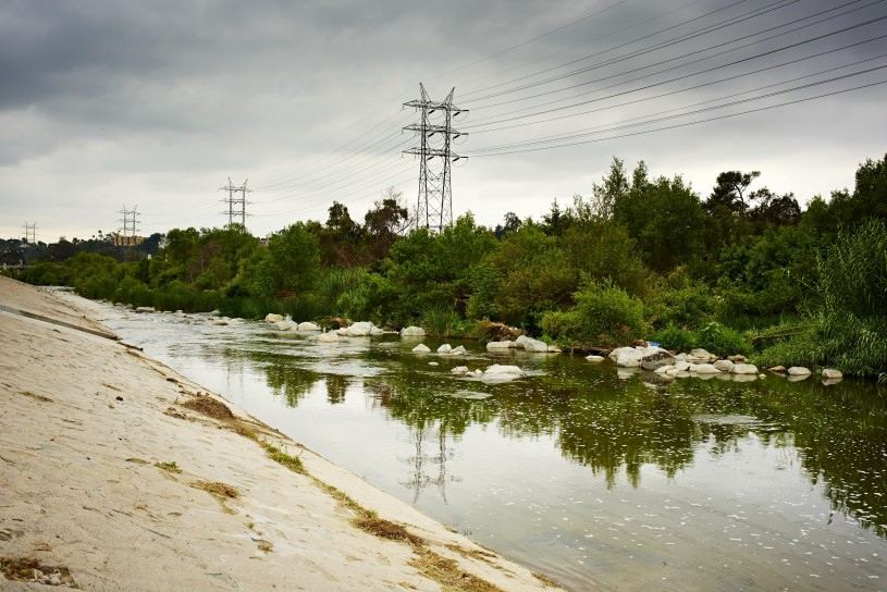 The Los Angeles River, the concrete artery of the city, is teeming with wildlife.