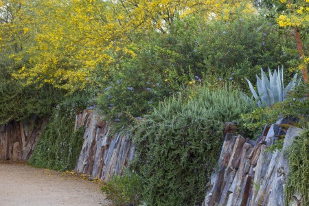 image of wall of bushes and flowers